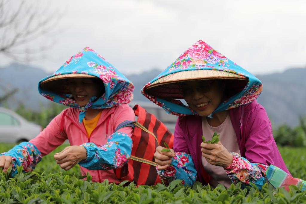 台東-饗嚮台東-採茶體驗|  玩食茶 感受一趟取一心二葉用心製茶的旅程(6人成行)(3歲(含)以下)活動場域保險費